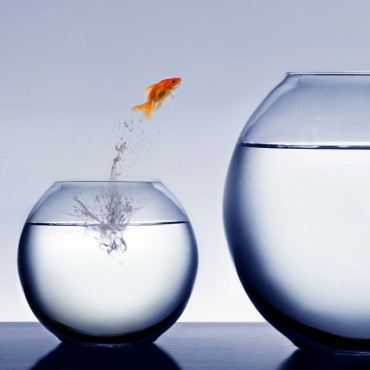 goldfish-jump-success.jpg